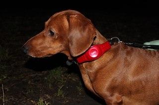 Аренда GPS трекер/GPS маяк PetTracker MSP-340  - 4